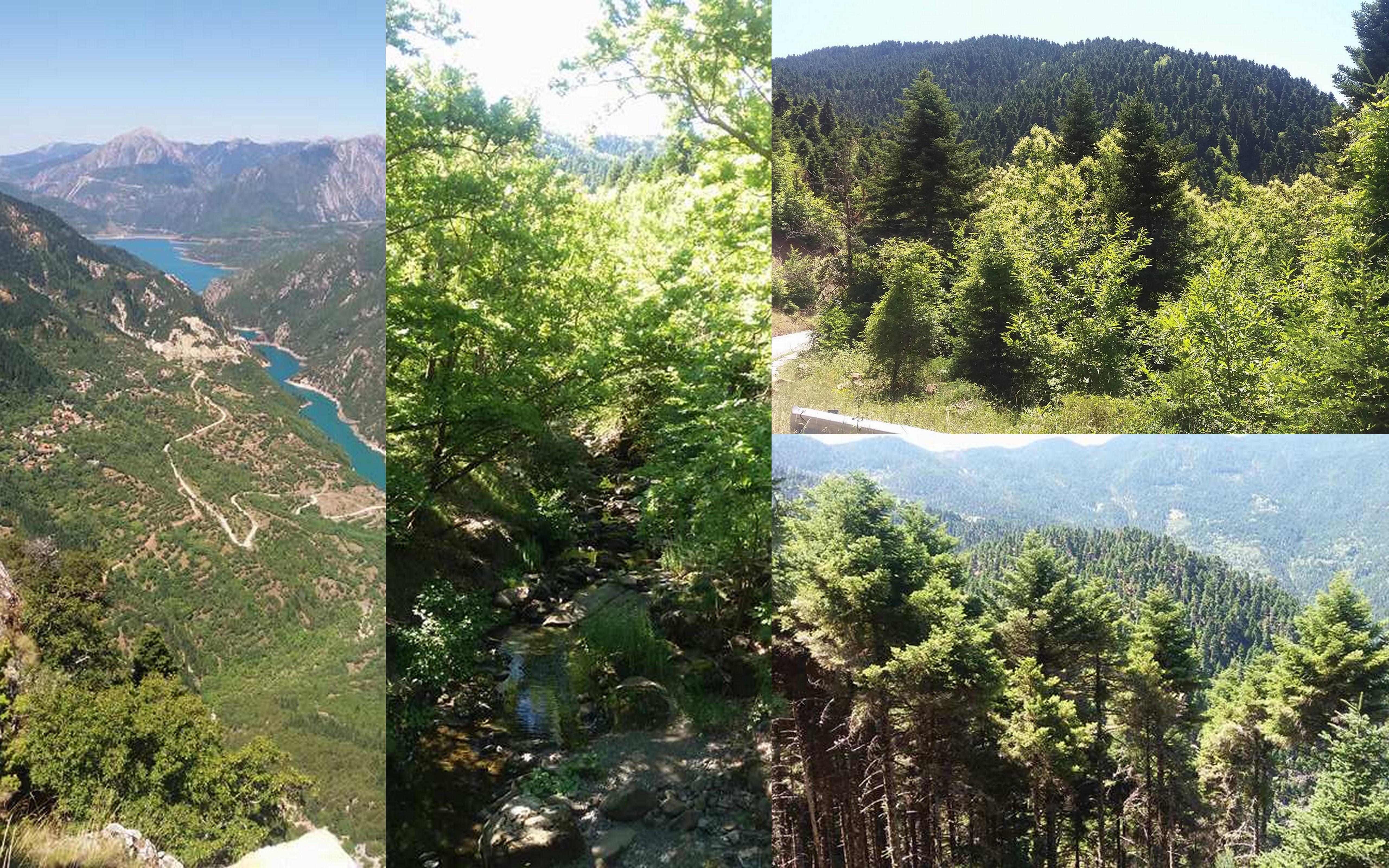 Ένας καταπράσινος παράδεισος!